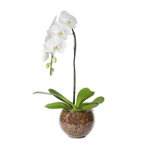 floricultura online e entrega de flores - orquídea cascata branca